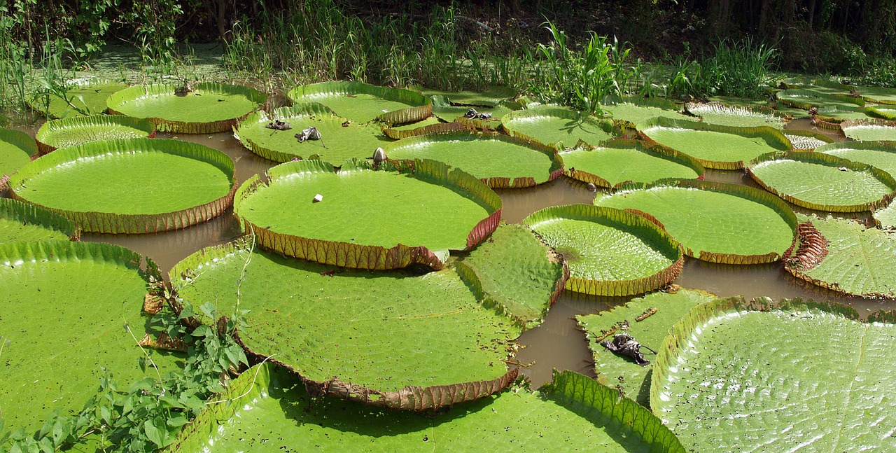 water-lilies-facts-stats